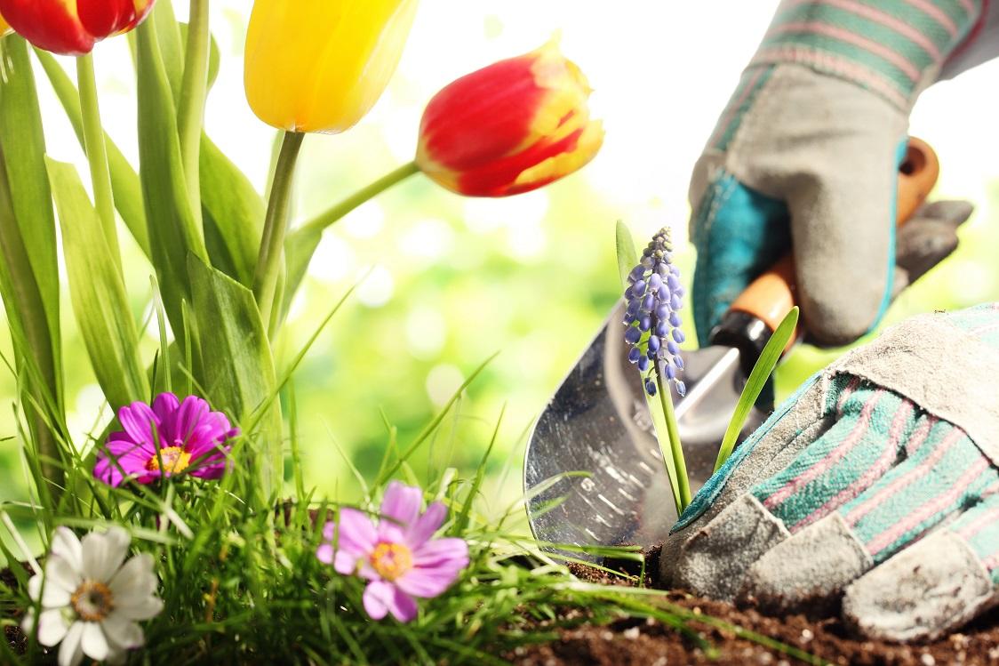 Entretien du jardin